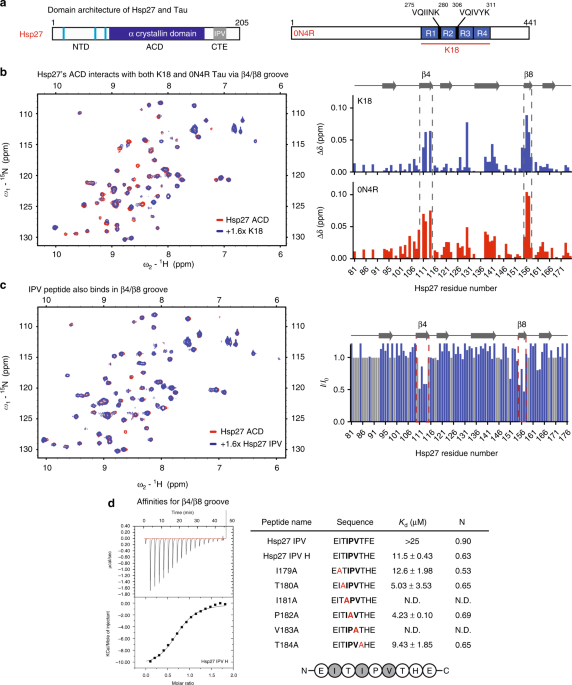 Competing Protein-protein Interactions Regulate Binding Of