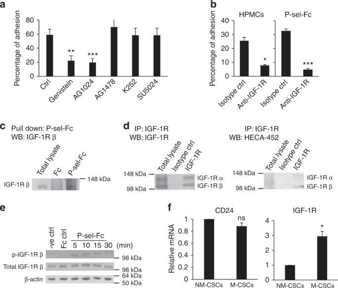 Sialyl Lewis X -P-selectin Cascade Mediates Tumor