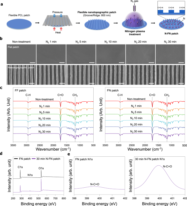 Two-color cortex [IMAGE] | EurekAlert! Science News Releases