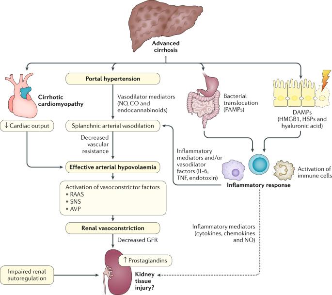 Hepatorenal syndrome | Nature Reviews Disease Primers