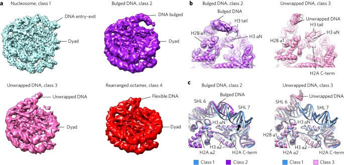 histone octamer rearranges to adapt to dna unwrapping