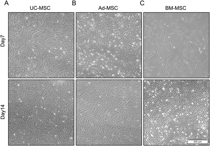 Mir 301b Mir 130b Ppar Axis Underlies The Adipogenic