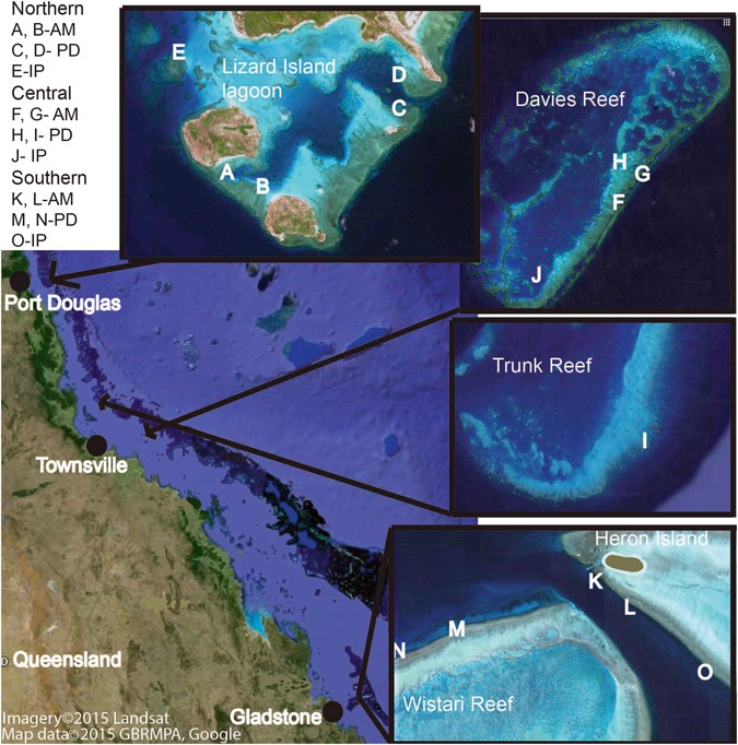 Variation In Growth Rates Of Branching Corals Along