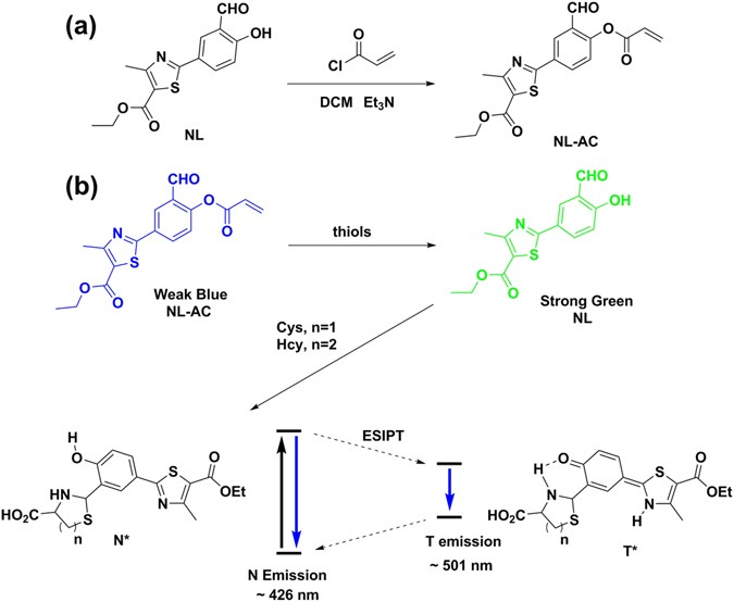 A turn-on near-infrared fluorescent probe with rapid
