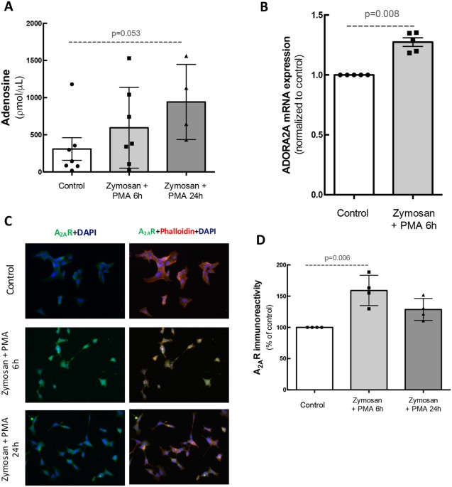 blockade of microglial adenosine a2a receptor impacts