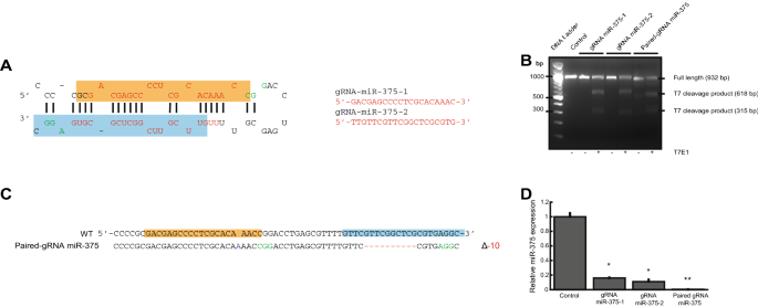miR-223 and NFIA expression patterns in the developing CNS