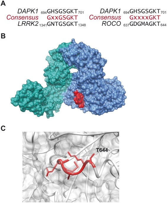 GTP Binding And Intramolecular Regulation By The ROC