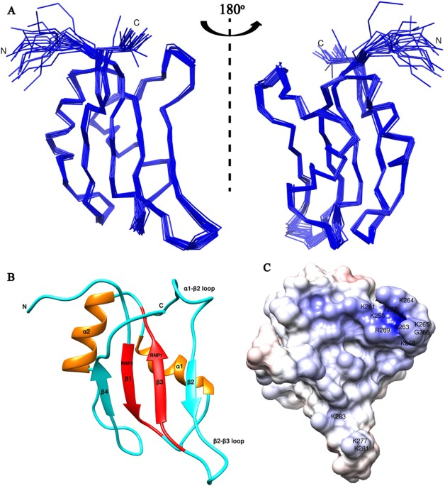 Structural Delineation Of Stem-loop RNA Binding By Human