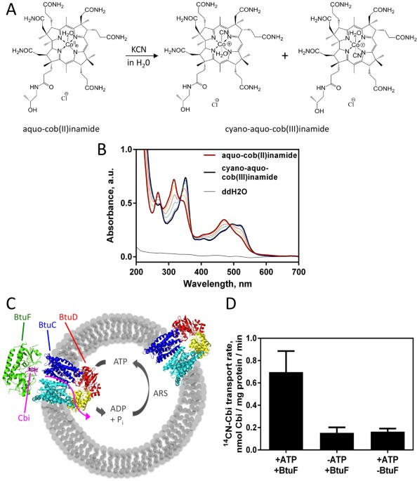 Conformational Change Of A Tryptophan Residue In BtuF