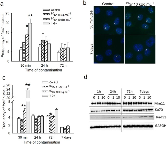 DNA damage induced by Strontium-90 exposure at low