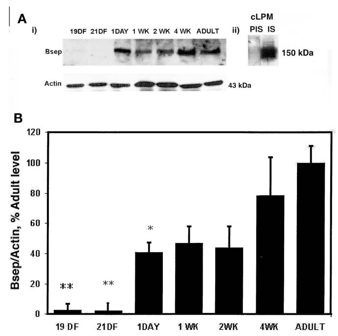 Differential Developmental Regulation Of Rat Liver