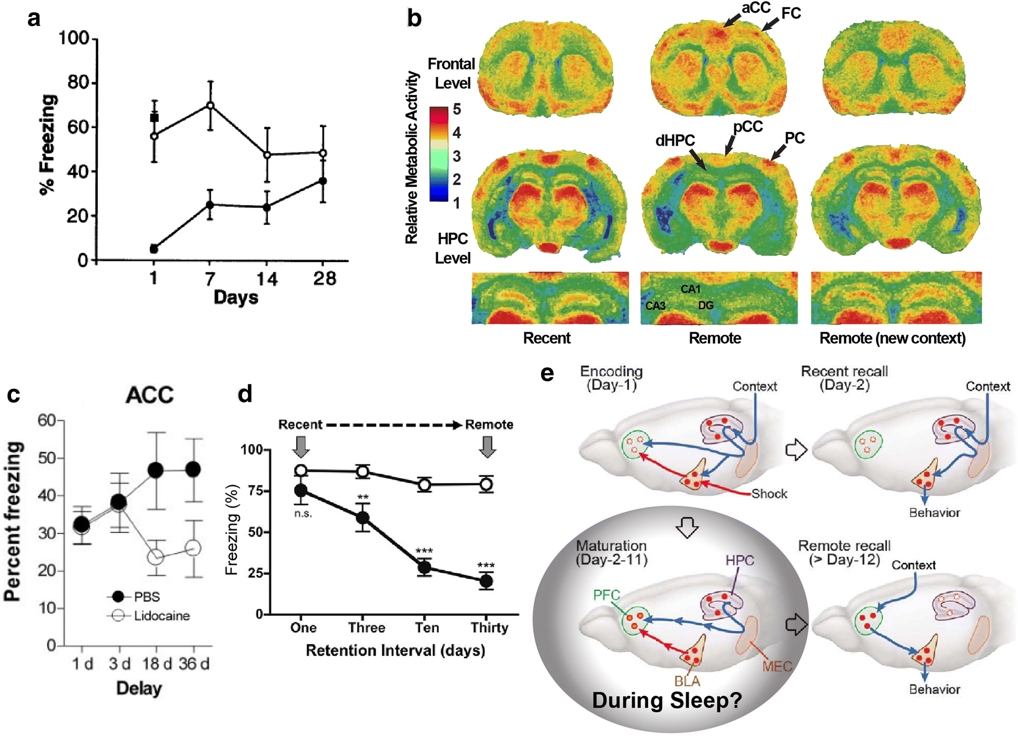 Memory Corticalization Triggered By Rem Sleep Mechanisms Of Md6 Wiring Diagram Open Image In New Window