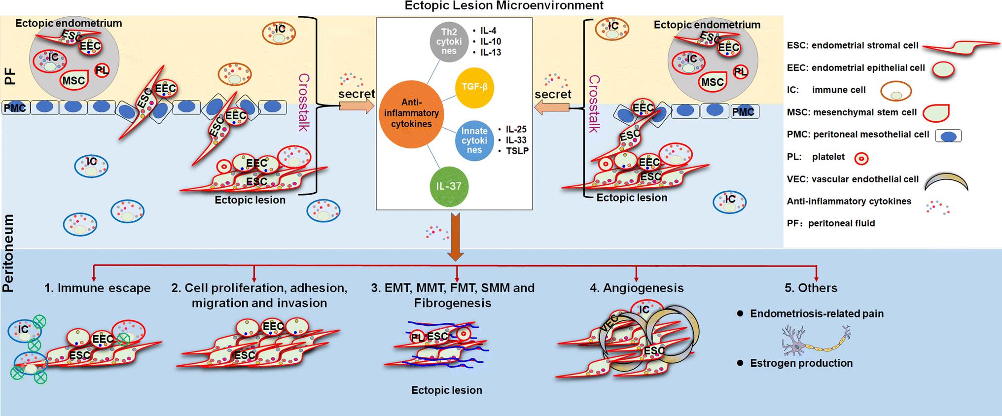 Anti-inflammatory cytokines in endometriosis | SpringerLink