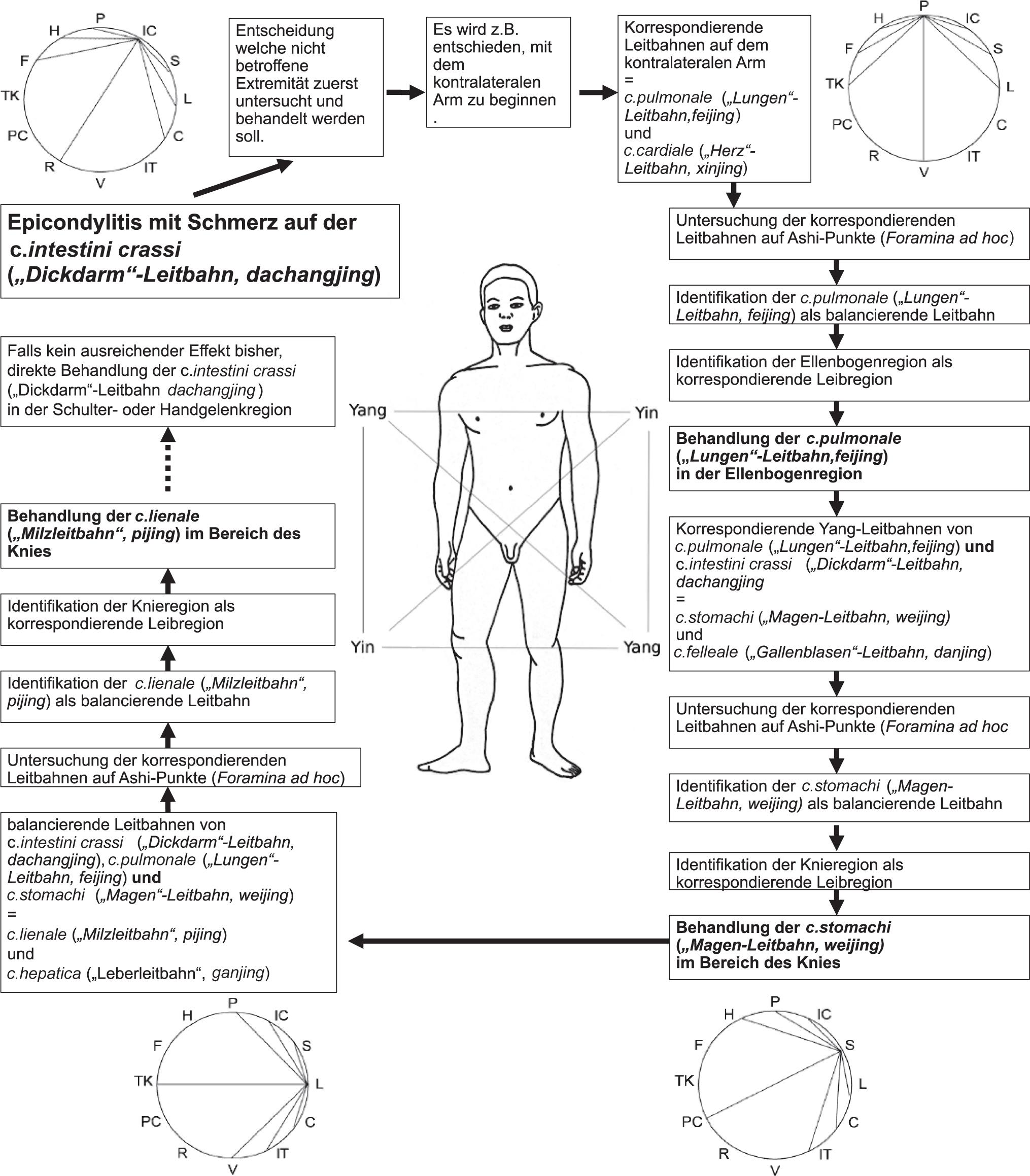 Erfreut Zerebrale Venendrainage Anatomie Ideen - Anatomie Von ...