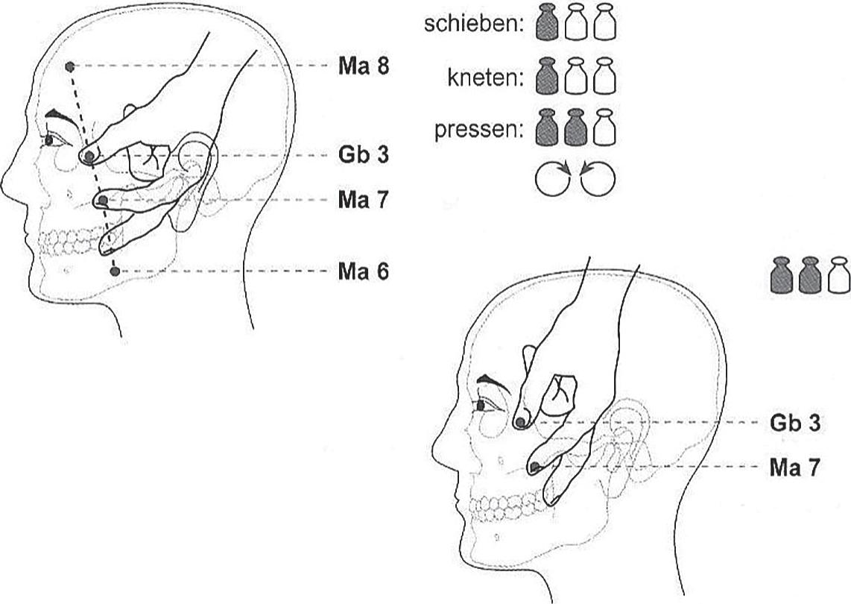 Groß Anatomie Der Stirn Fotos - Menschliche Anatomie Bilder ...