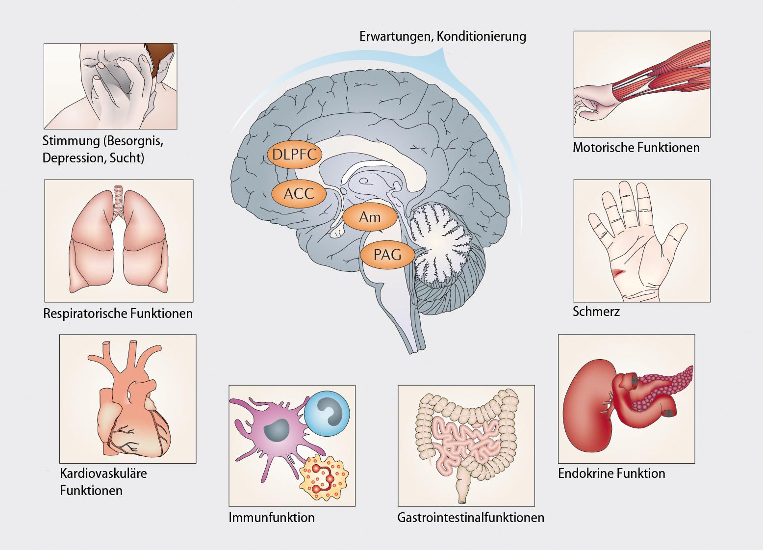Placeboeffekte und ihre Implikationen in der Medizin   SpringerLink