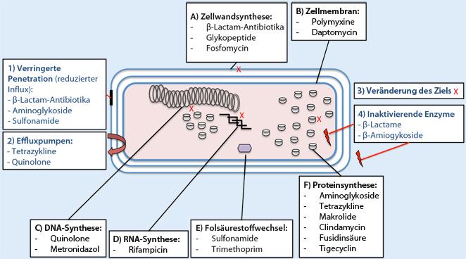 Kann Antibiotika Die Periode Verschieben