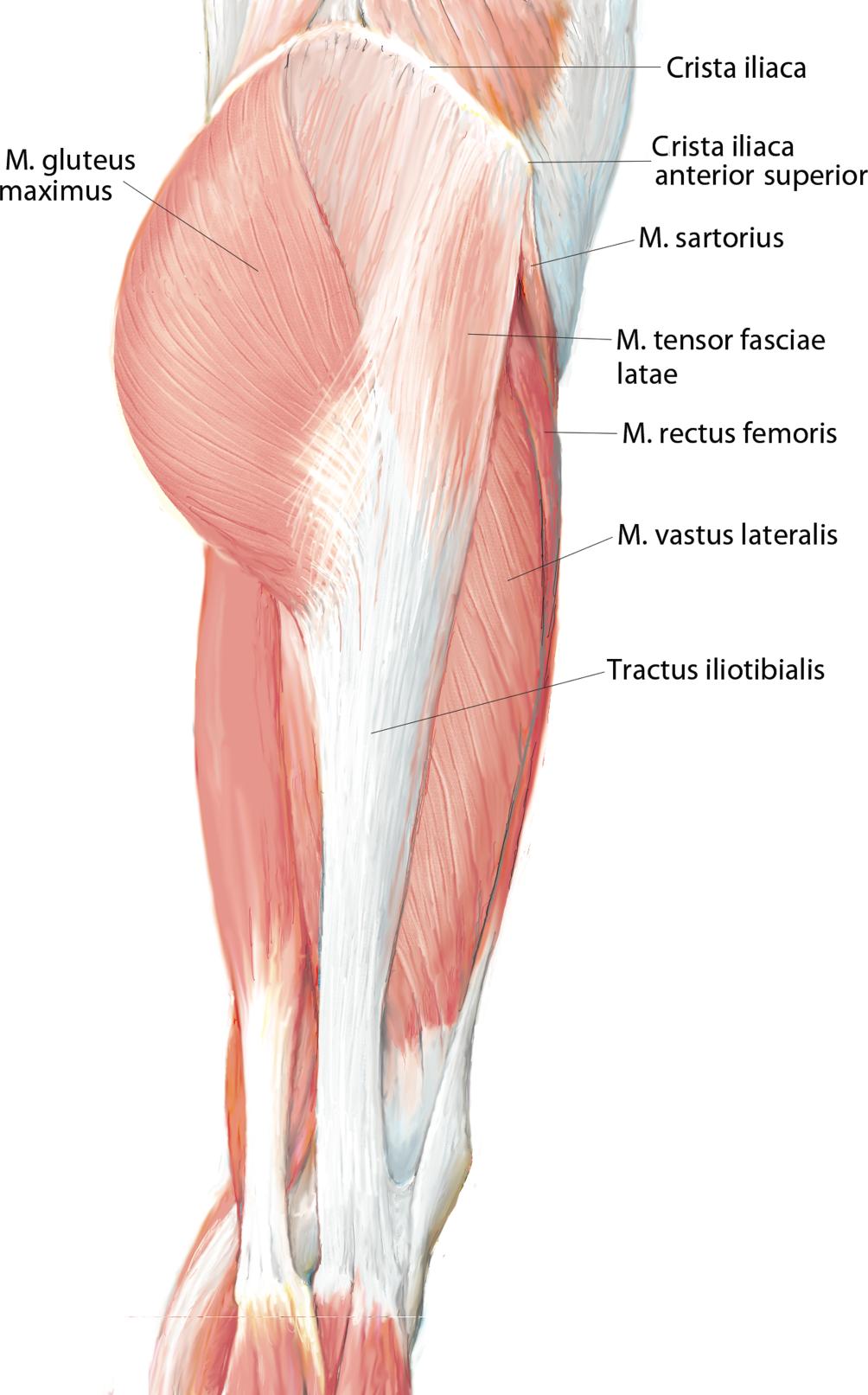 Defektdeckung mit Musculus-tensor-fasciae-latae-Lappen | SpringerLink