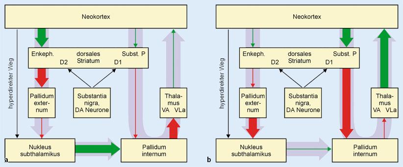 Neue Sicht des kortiko-striato-thalamo-kortikalen Regelkreises bei ...