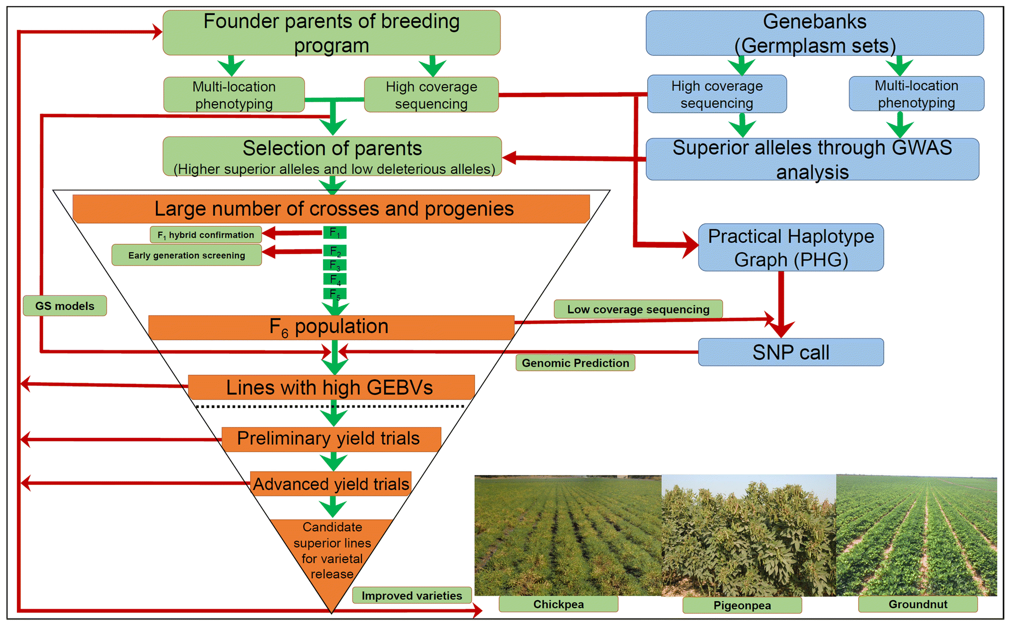 Toward the sequence-based breeding in legumes in the post
