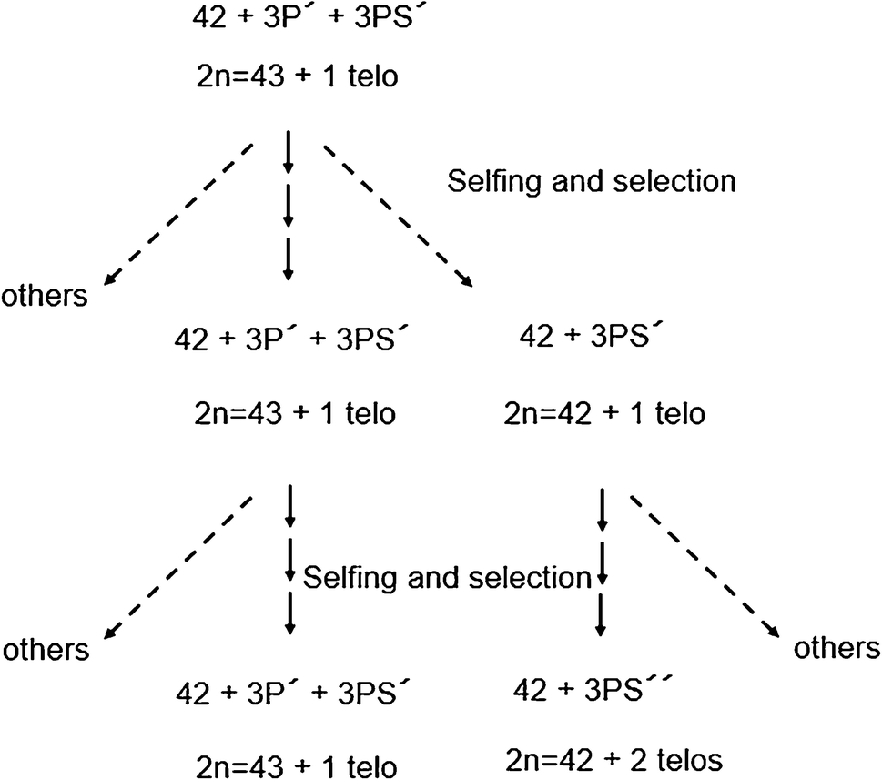 Uncovering homeologous relationships between tetraploid
