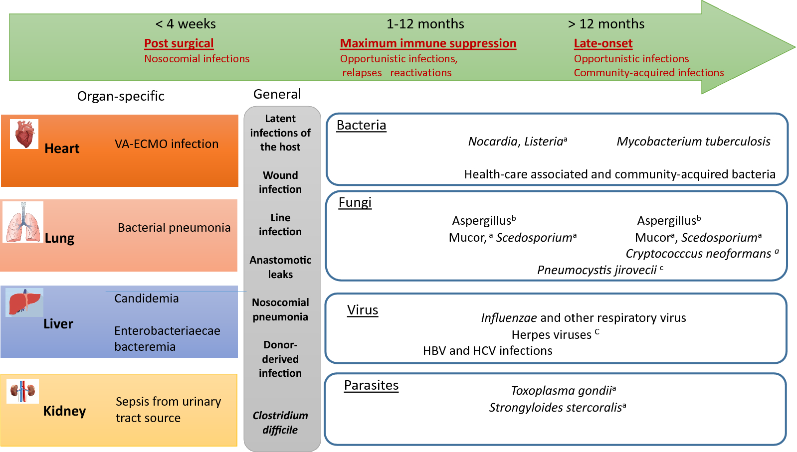 Diagnostic and therapeutic approach to infectious diseases