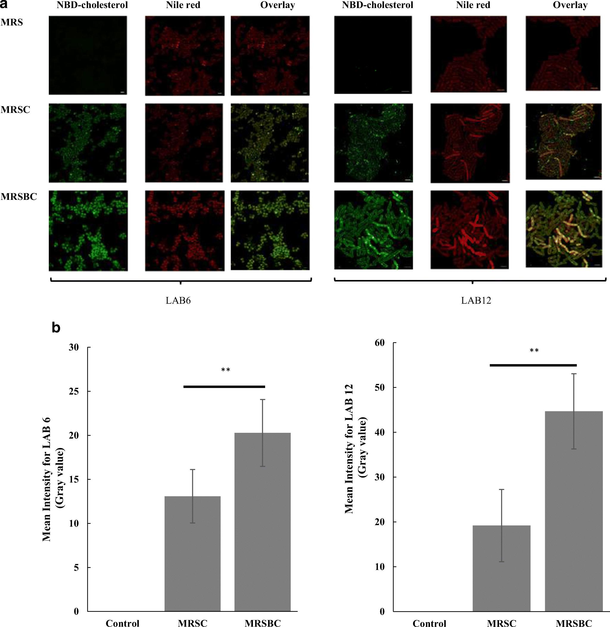In vitro assessment of pediococci- and lactobacilli-induced