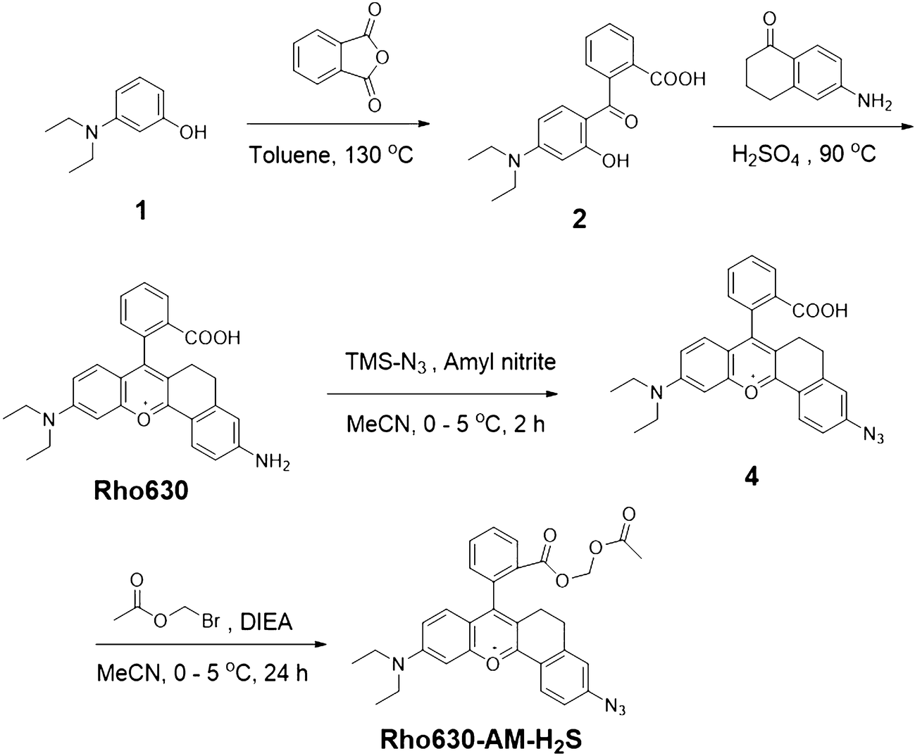 Construction of a novel cell-trappable fluorescent probe for