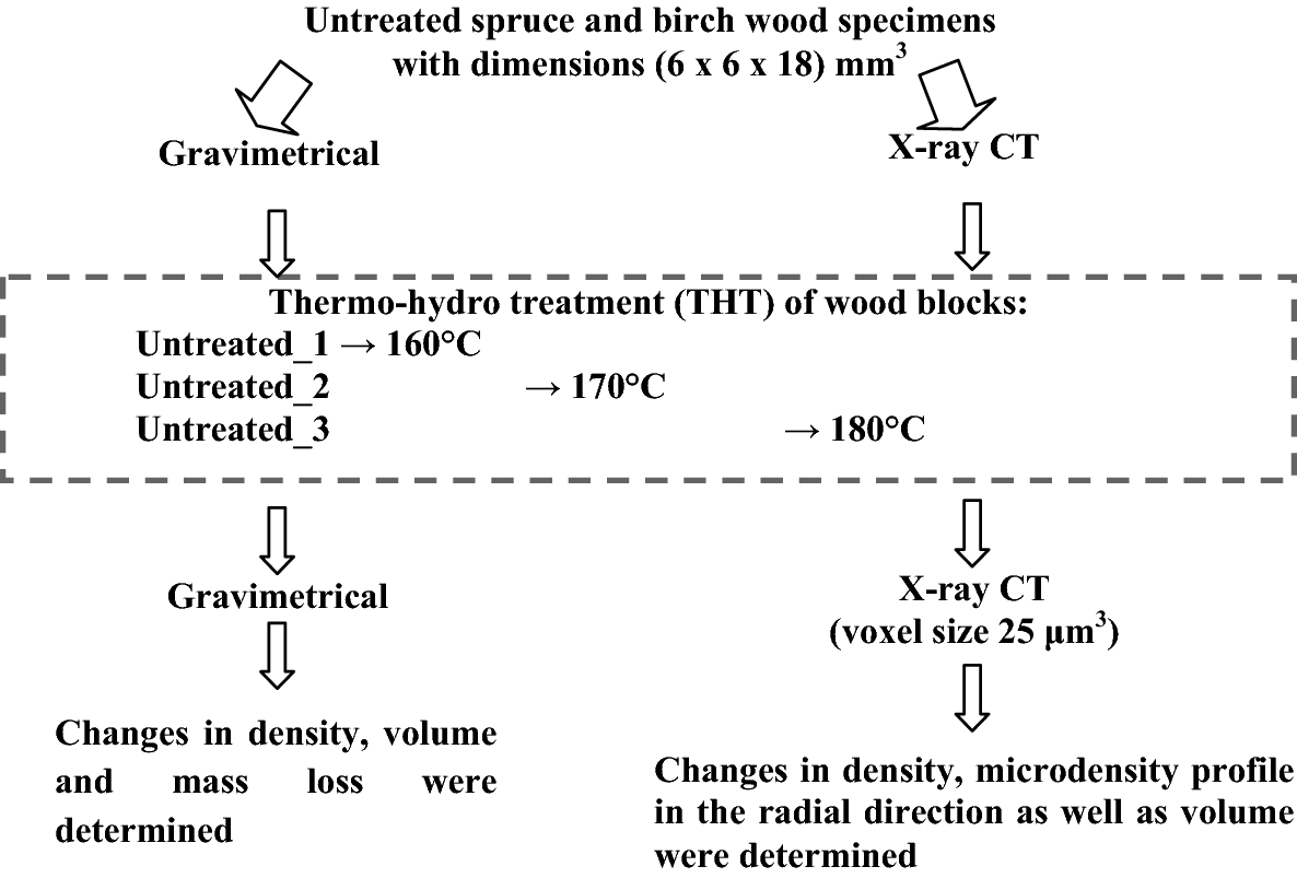 Density and density profile changes in birch and spruce