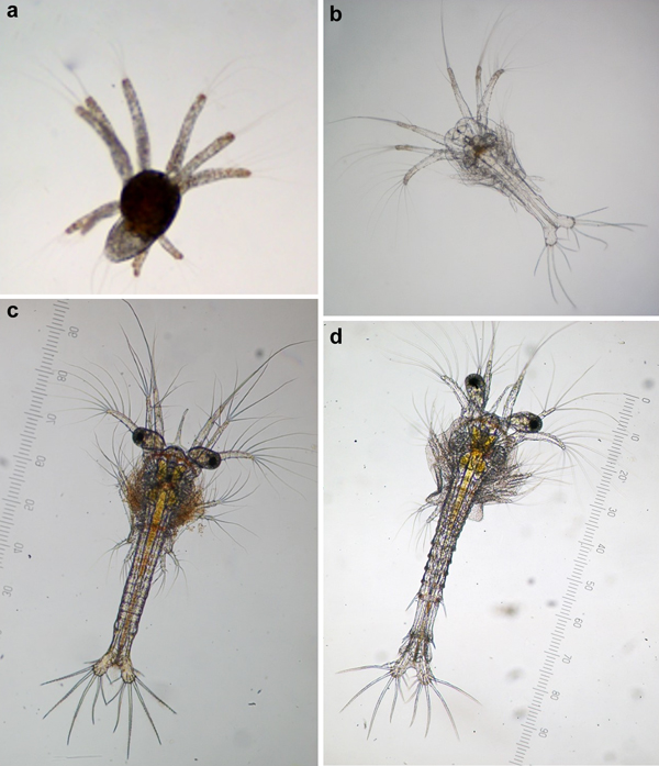 Mortality on zoea stage of the Pacific white shrimp Litopenaeus