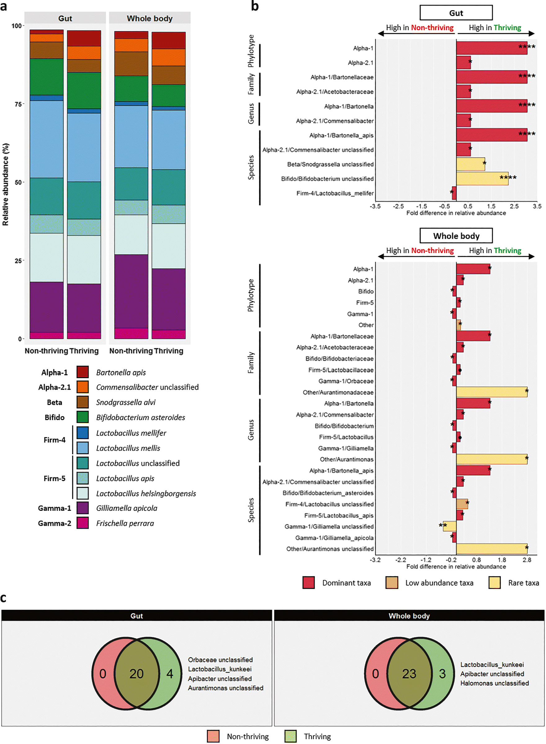 Gut and Whole-Body Microbiota of the Honey Bee Separate