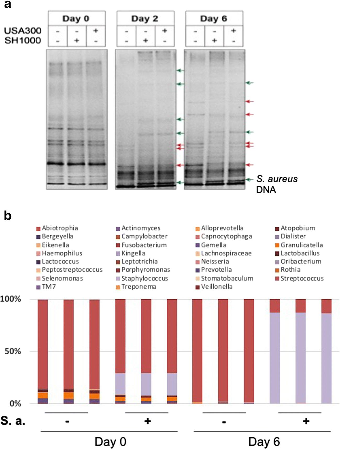The Oral Bacterium Fusobacterium nucleatum Binds