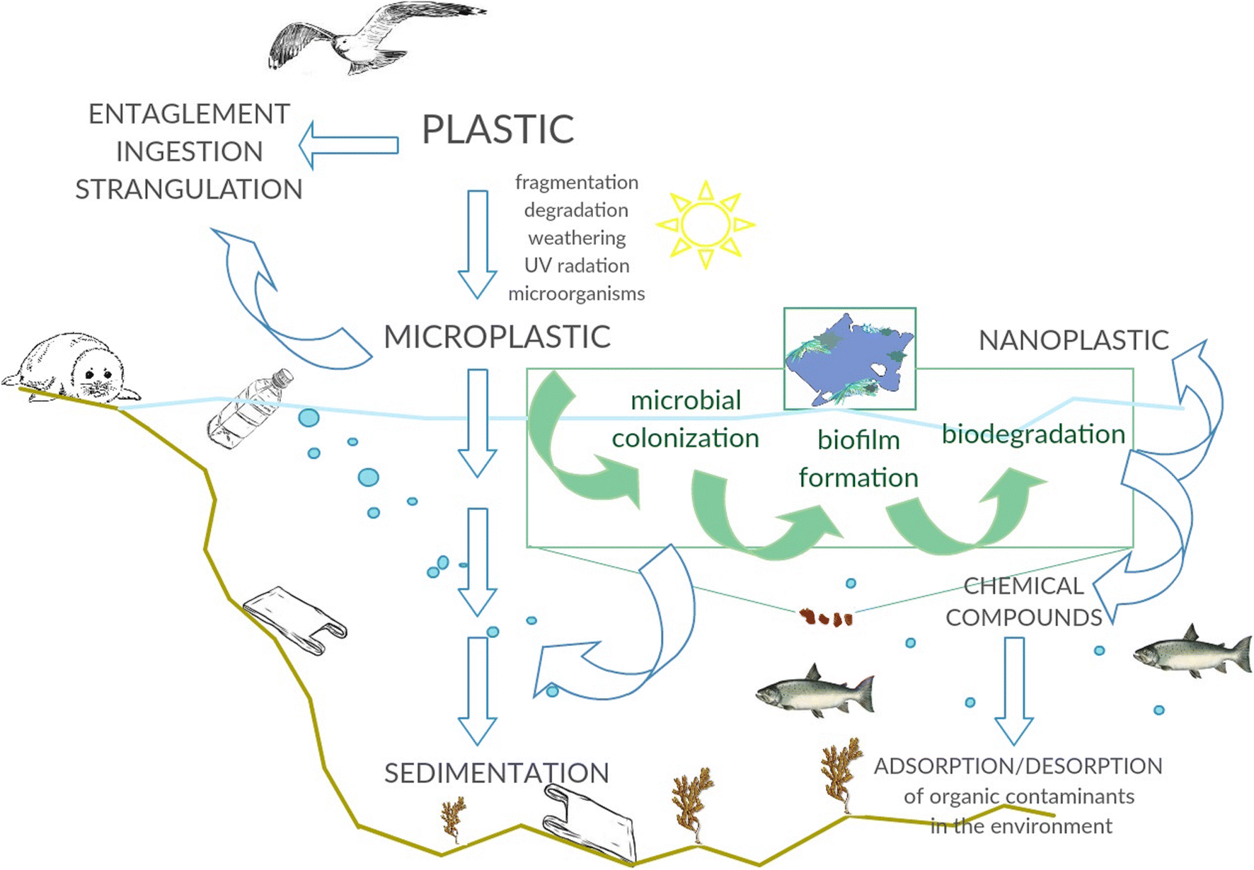 Degradation of plastics and plastic-degrading bacteria in cold