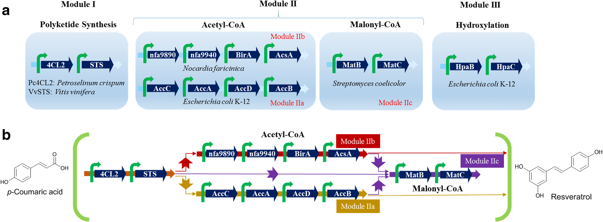Modular pathway engineering for resveratrol and piceatannol