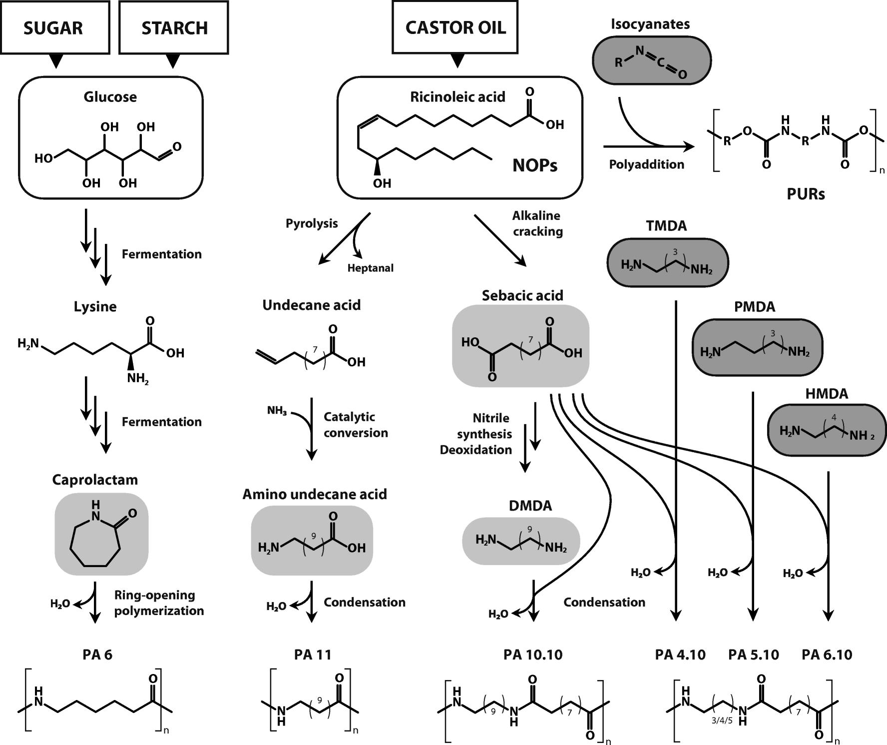 juoksukengät halpa hieno tyyli Recent developments in non-biodegradable biopolymers ...