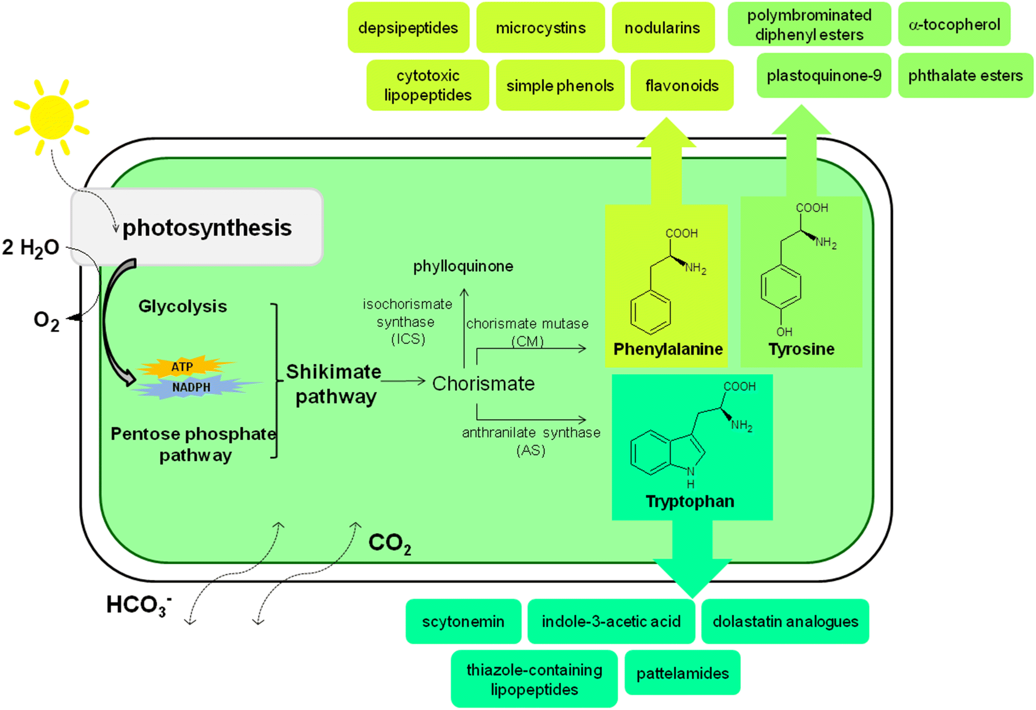 Metabolic relation of cyanobacteria to aromatic compounds