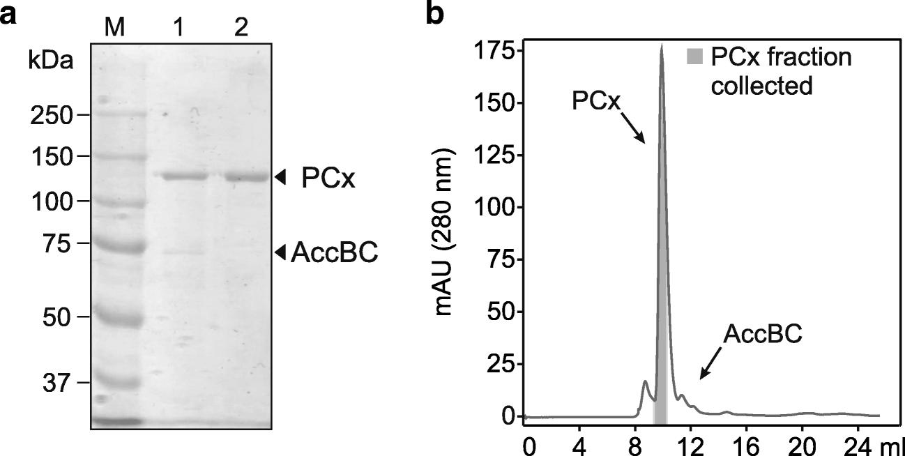 Pyruvate carboxylase from Corynebacterium glutamicum : purification