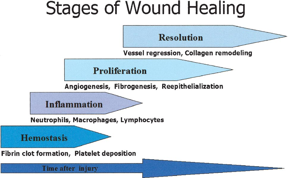 Aging and Wound Healing | SpringerLink