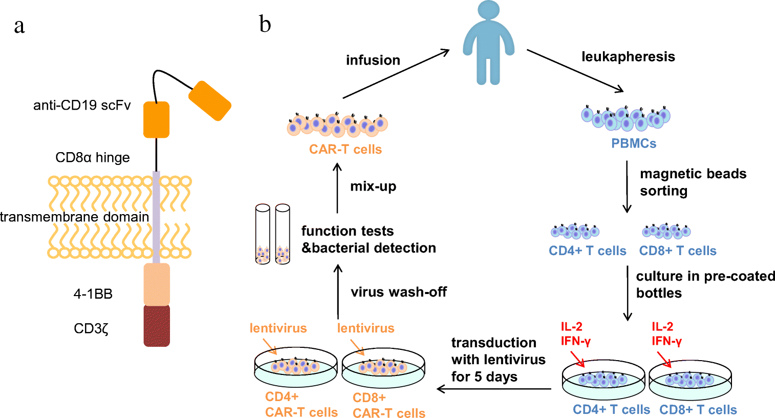 Improving The Safety Of Car T Cell Therapy By Controlling Crs