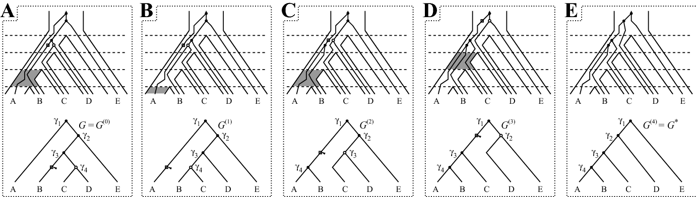 On the unranked topology of maximally probable ranked gene