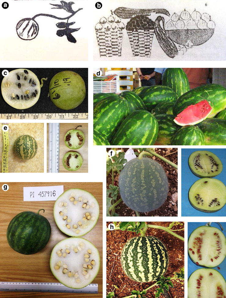 74b425d30299a Overview of the origins and history of the five major cucurbit crops ...
