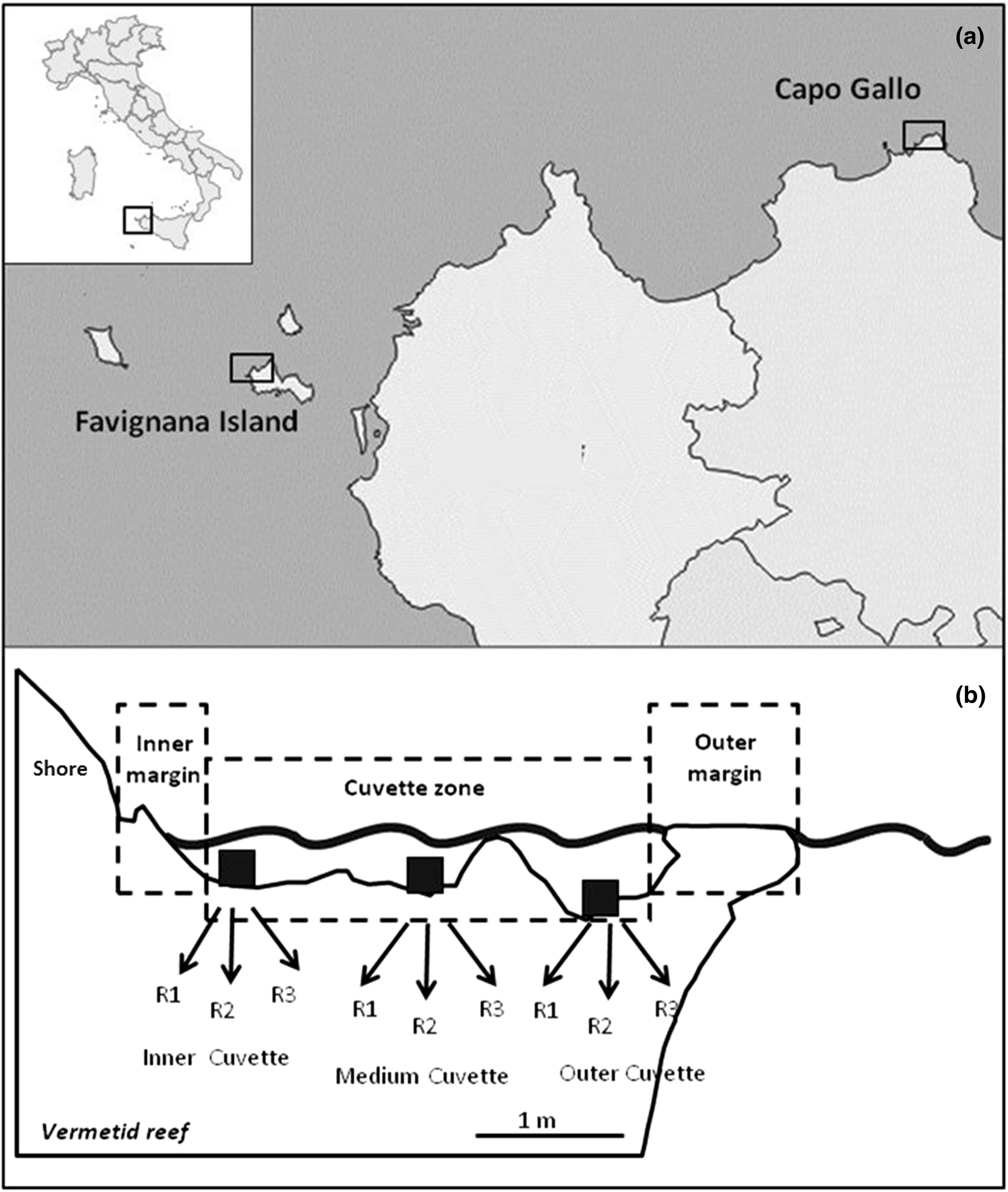 Meiofauna associated with vermetid reefs: the role of