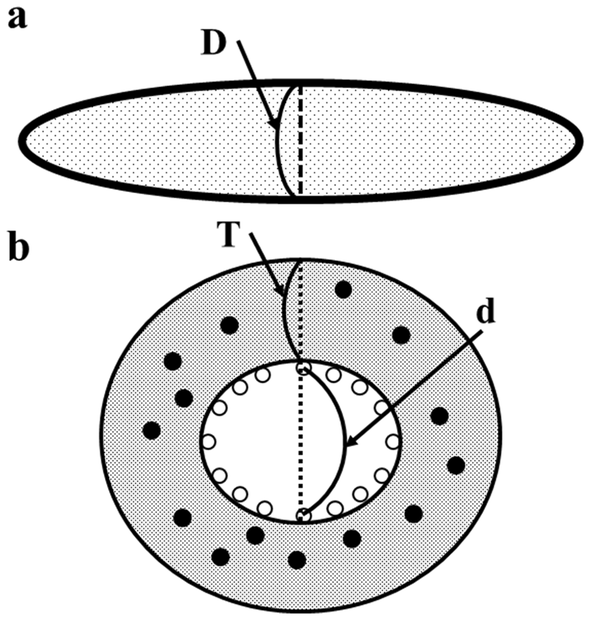 Diagram Blood Vessel Hepatic Portal System