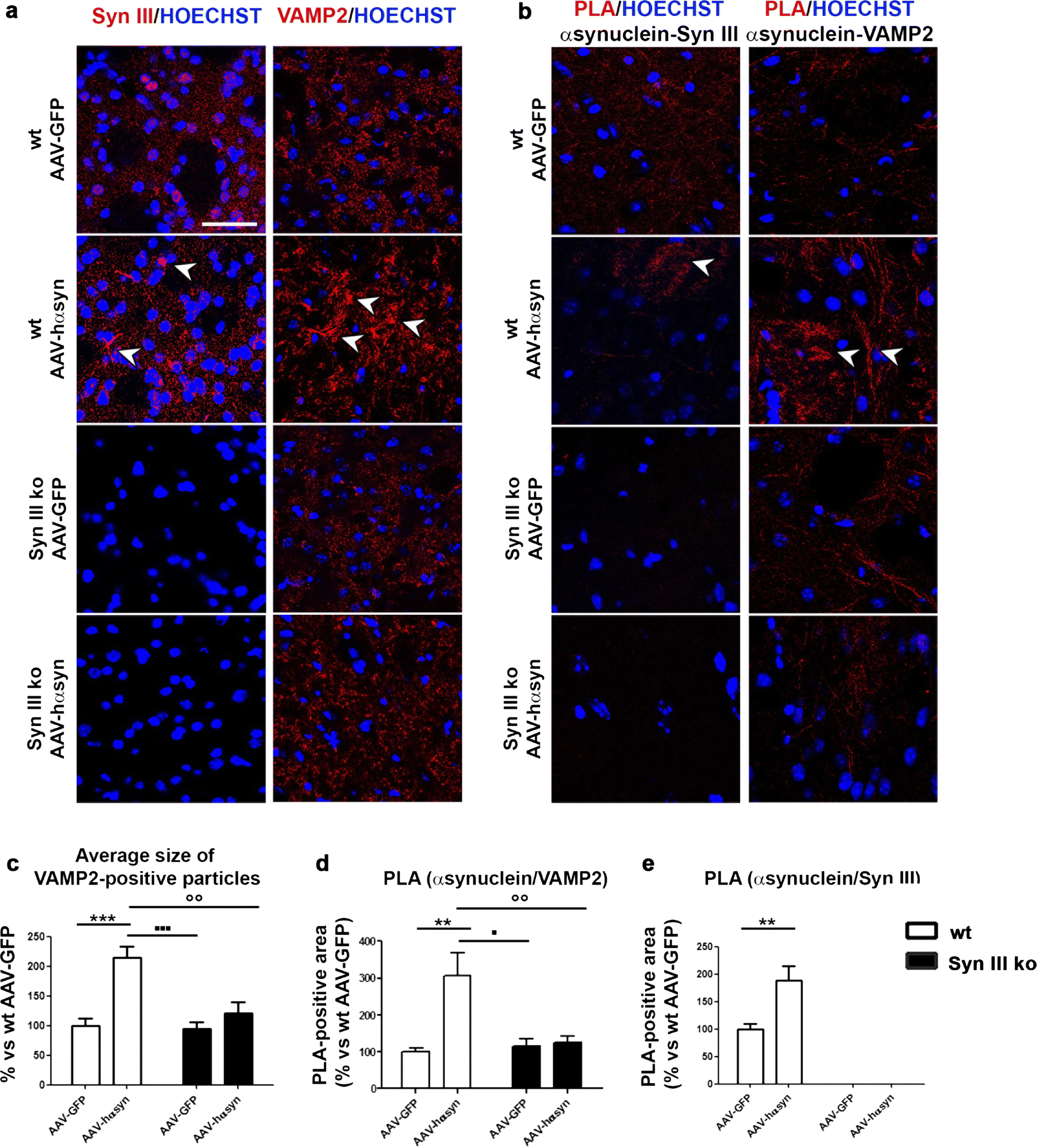 Synapsin III deficiency hampers α-synuclein aggregation