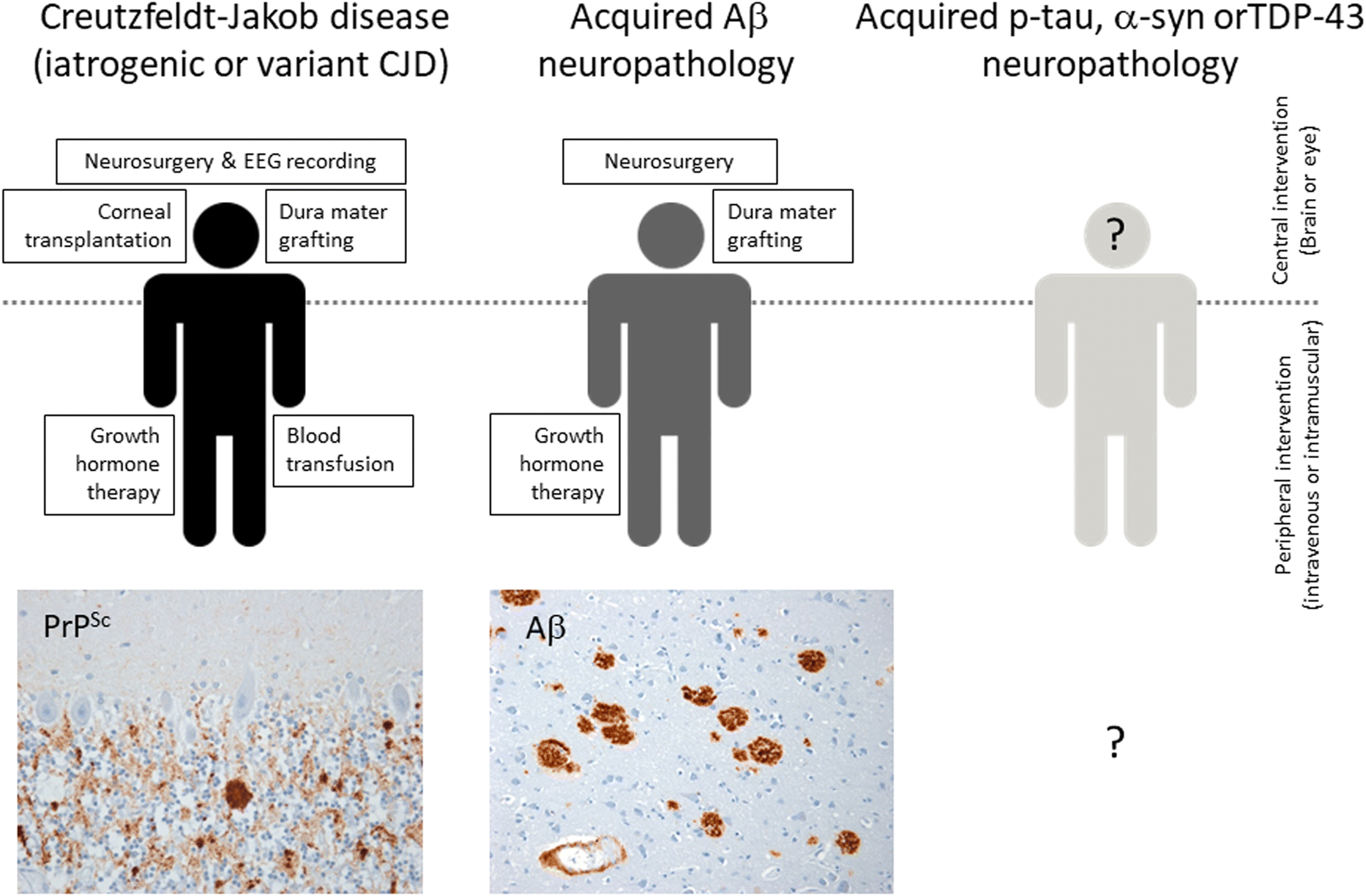 Renewed assessment of the risk of emergent advanced cell
