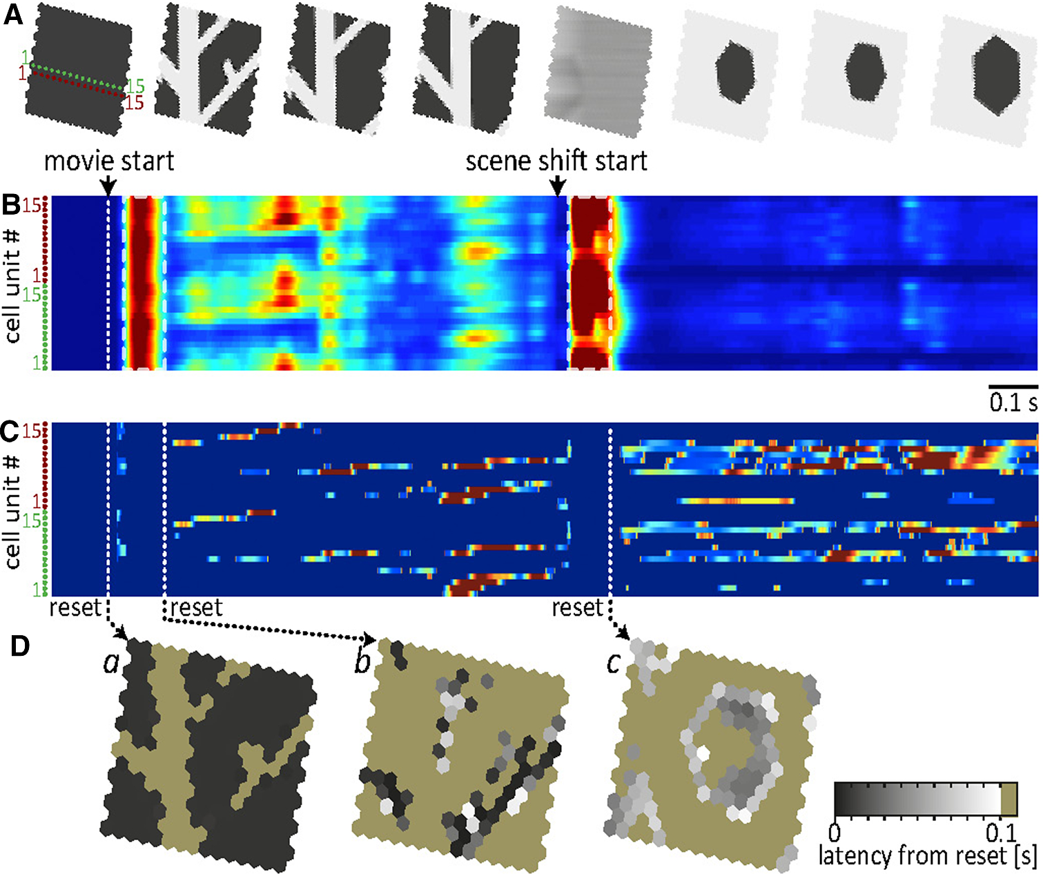 A single retinal circuit model for multiple computations
