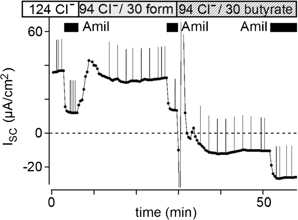 involvement of butyrate in electrogenic k  secretion in rat rectal colon