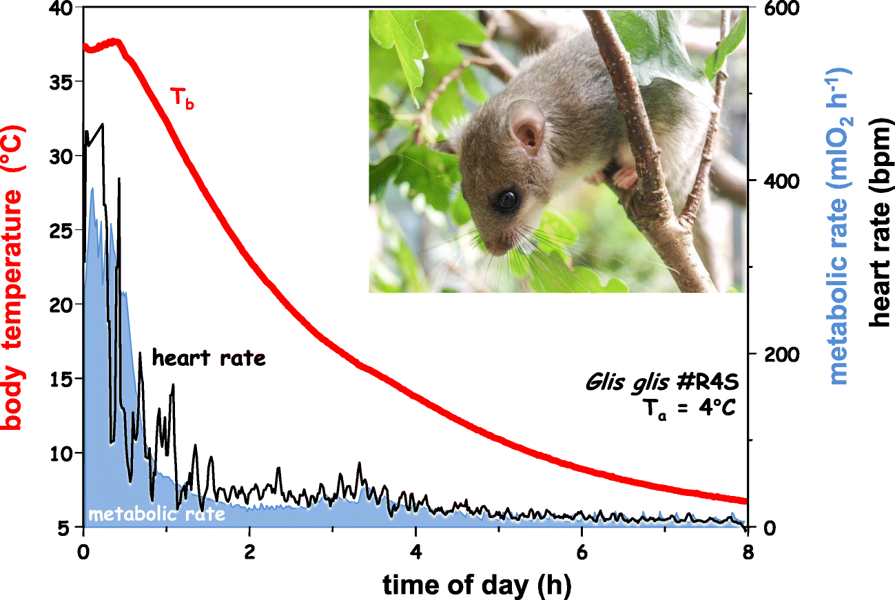 Torpid Snow Primates Found In Midwest >> Hibernating Astronauts Science Or Fiction Springerlink