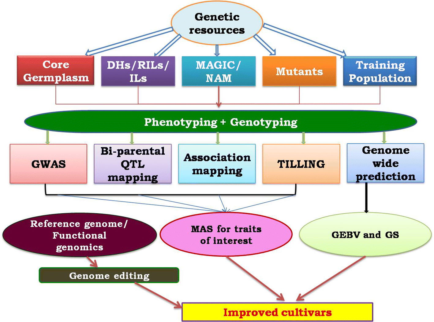 Phenomics and genomics of finger millet: current status and
