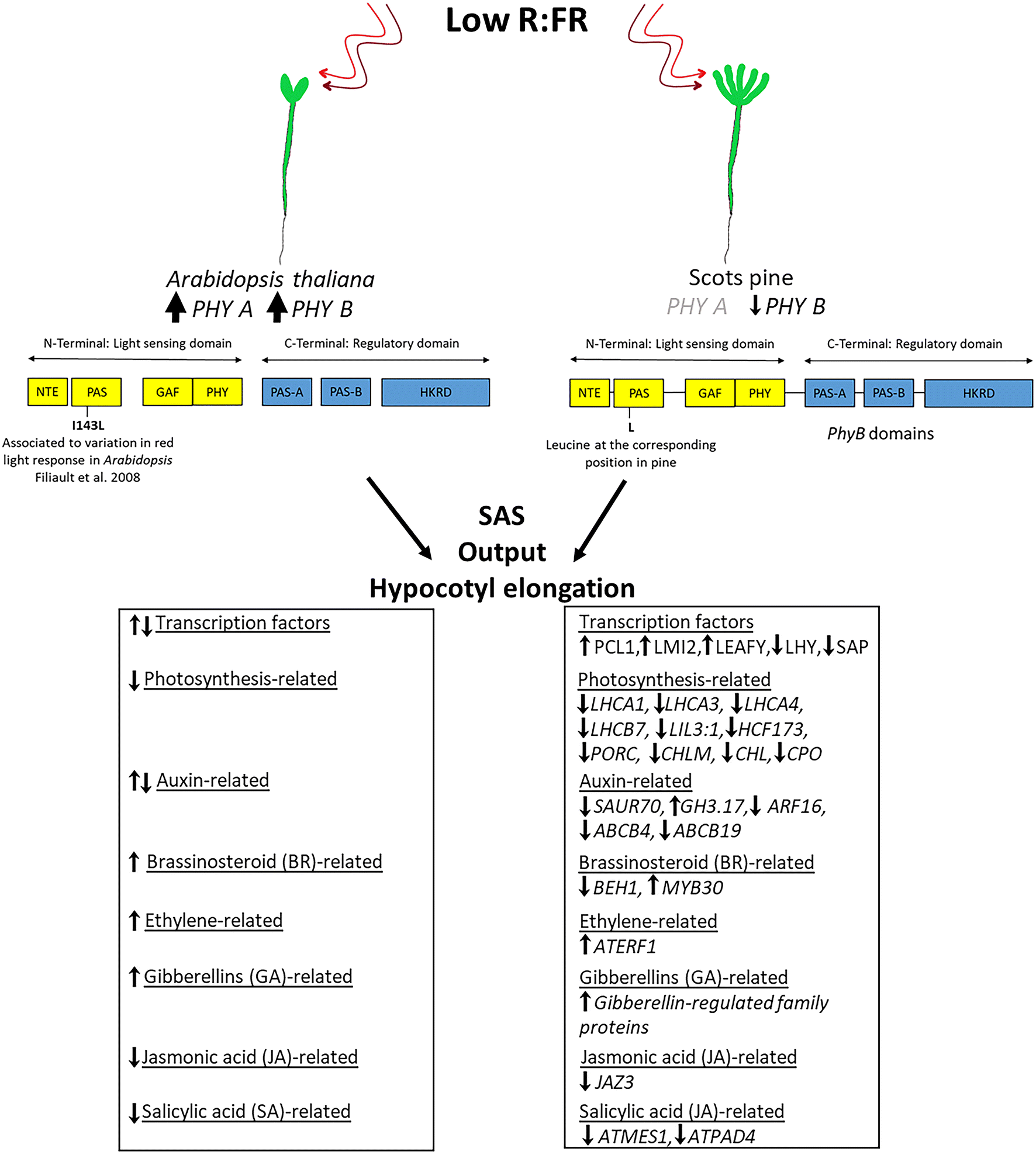 Transcriptome analysis of shade avoidance and shade